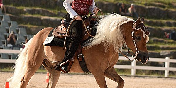Endstand Horse & Dog Trail Trophy 2021